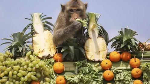 泰国猴子宴 请2000多只猴子吃自助餐 消耗水果1000斤
