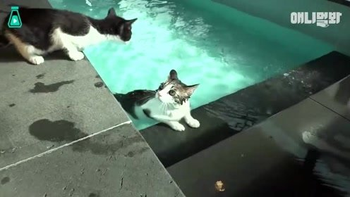 对啥都兴致缺缺小猫咪,爱好居然是游泳,看见水就两眼发光