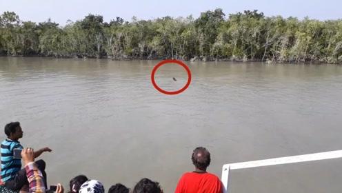 一只老虎正在渡河,被一群人坐船围观,老虎:要不请我上去坐坐?