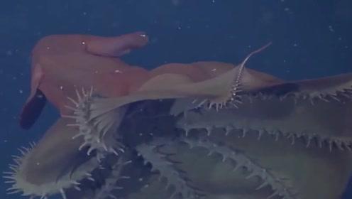 """长有两只""""大耳朵""""的深海幽灵,每天捡拾垃圾为食"""
