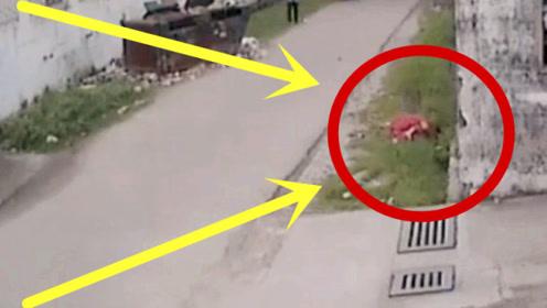 少妇回家惨遭劫杀,丈夫看到嗷嗷待哺孩子,瞬间泪目!