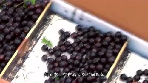 为什么酿酒的葡萄不能用水清洗?
