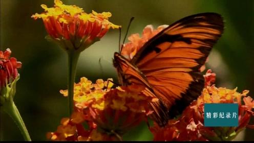 植物和昆虫情牵意伴数百万年!协同进化情意绵绵!