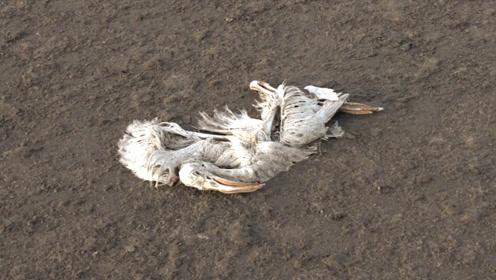 非洲诡异湖泊,动物进去秒变干尸!网友:制作雕塑的好地方
