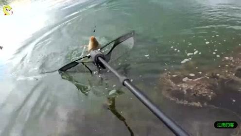 俩男子到河边放下几根钓竿,第一竿就钓到一条大鲤鱼