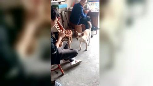 这狗不让人抽烟,能让人戒烟的狗