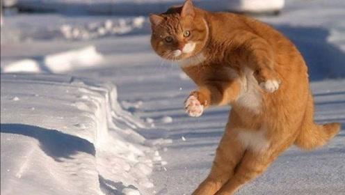 当好奇的猫宝宝们看到雪,他们会有什么样的反应呢?