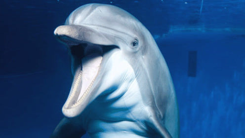 为何说海豚的微笑是最大的骗局?看完后沉默不语,太让人心酸!