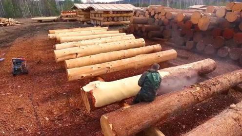 用高压水流去除树皮,效率有多高?这可以节约不少人工吧
