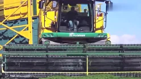先进的农业机械设备芹菜收割机,据说一天可以收获上千亩,实用!