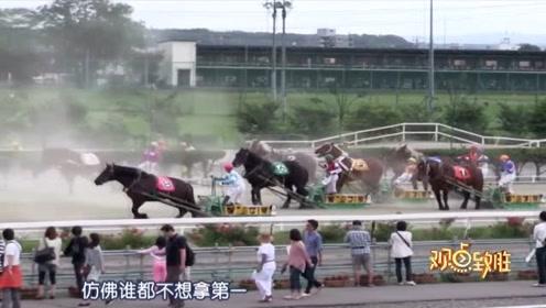 """日本举行世界上最慢的赛马比赛 """"失败马""""可能会被刺身吃掉"""