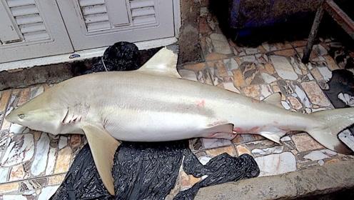日本人还真是生猛,直接切割小虎鲨,一起见识下