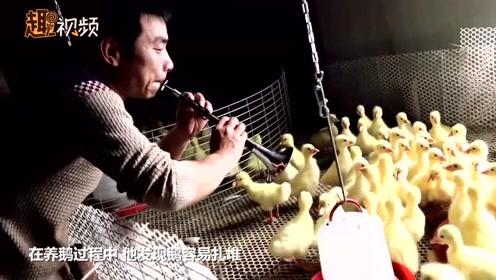 农村小伙音乐疗法养鹅:放摇滚吹唢呐还跳舞给鹅看