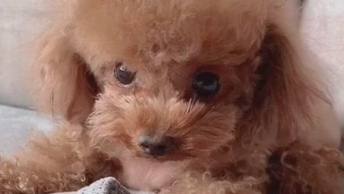 让小奶狗做个凶狠的表情,浑身颤抖的一幕,出卖了它!