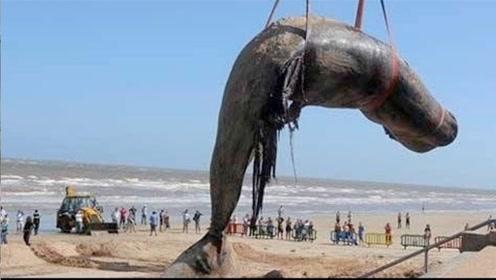 印度惊现巨大鲸鱼尸体,村民纷纷上前围观,背后原因令人心酸!