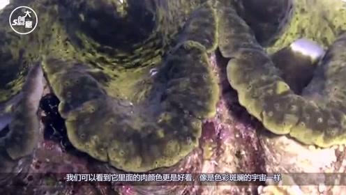 800块钱在日本买个大蛤蜊,补药觉得贵,看完才知道有多值了!