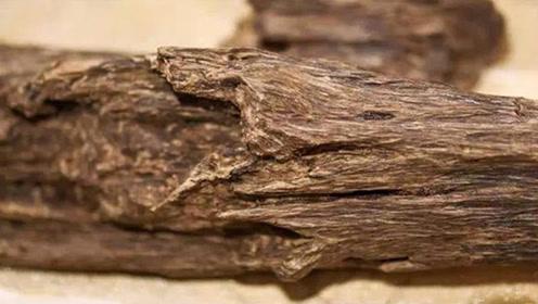 烂木头有大来头,老人山上无意间挖出,得知真相后每天抱着睡觉