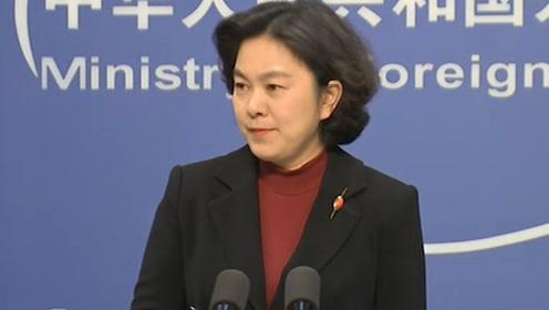 华春莹:熊猫块头很大 但它会比秃鹰更危险吗?
