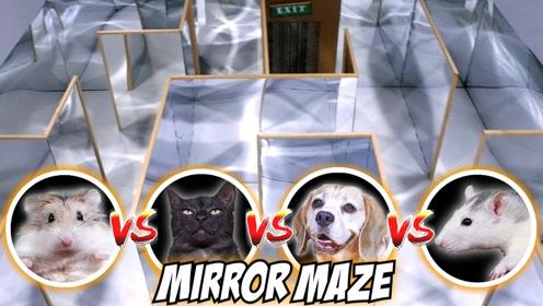 把猫、狗、耗子和仓鼠分别放到镜子迷宫里,谁会先走出来?