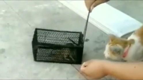 老鼠我决定放你一马,活不活就看你造化了