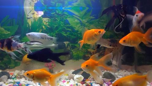 不管家里多穷,家里鱼缸切记不要乱放,很多人都不懂,不是迷信
