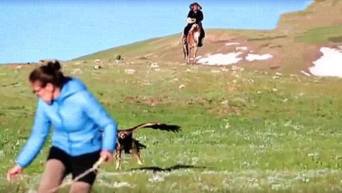 女子训练金雕捕食,结果发生意外,金雕把自己当成了猎物!