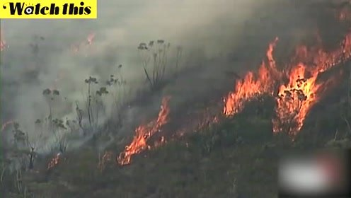澳大利亚森林大火肆虐致多人死亡 现场宛如炼狱