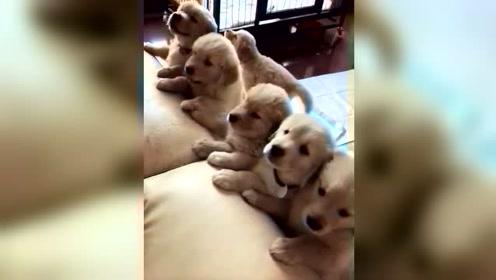 调戏狗狗真的是一件很有意思的事