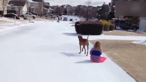 这狗帮主人拿东西看娃陪老人,还能救主人命