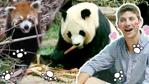 外国人第一次见真熊猫,竟然感动哭了!