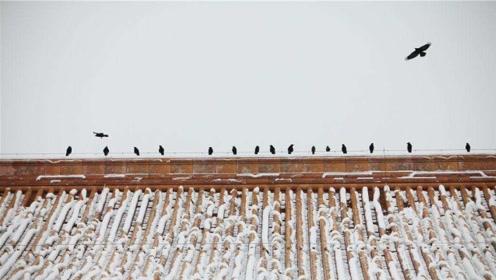 北京鬼城晚上全是乌鸦!专家揭秘清朝灭亡后北京为啥乌鸦这么多!