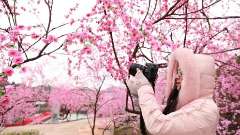"""重庆梁平数百亩桃花""""盛开"""" 原来全是高仿塑料花"""