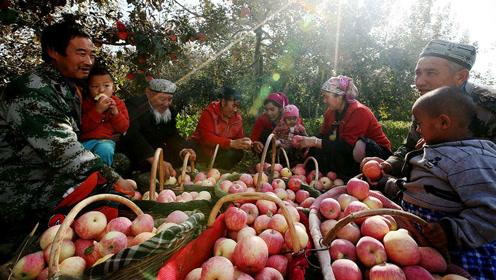 美国日本的苹果树都来自新疆棕熊的便便?吃苹果前应该知道这件事