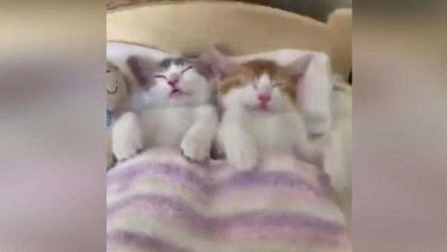 早晨和男朋友一起醒来的你,这碗猫粮我先干为敬!