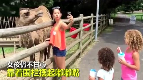 美女扳着骆驼头强行合影被咬 网友:活该!谁让她穿的像胡萝卜