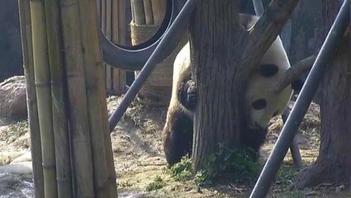 """熊猫""""磨皮""""教程出来了,包学包会!"""