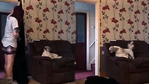 调皮主人跟狗子玩消失 狗狗吓的大叫