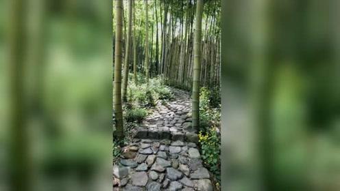 喜欢这片竹林 行走其中 舒爽