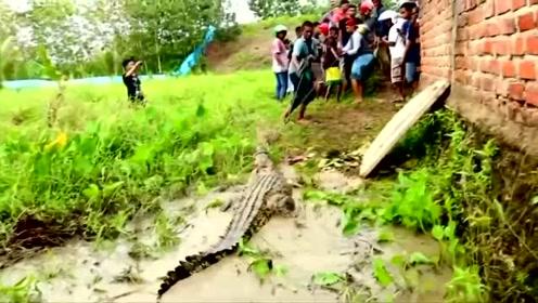 印尼鳄鱼咬死村民 全村复仇杀近300条鳄鱼