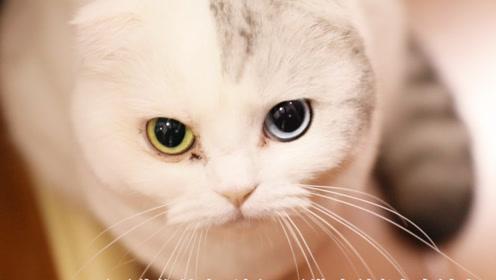 一个视频告诉你,猫咪到底有多神奇