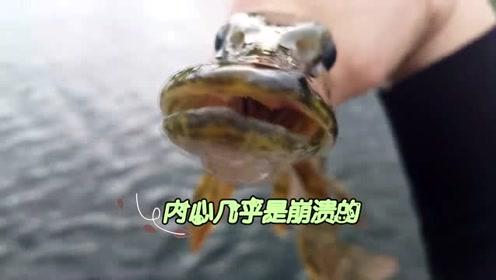 水形怪鱼之搞笑篇