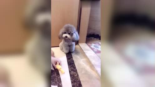 聪明主人管教自家的狗不乱跑都有自己独特方案!