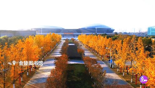 银杏染秋冬,南京的这些地方美成仙境,惊艳你的朋友圈!