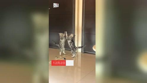 第一次照镜子的猫咪