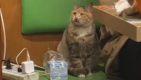 被赶出去3次的流浪猫,跟着客人进来取暖,悄悄躲在旁边不敢乱动