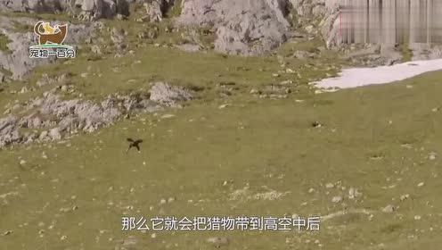 老鹰和海蛇空中激战,谁能更胜一筹?镜头拍下全过程