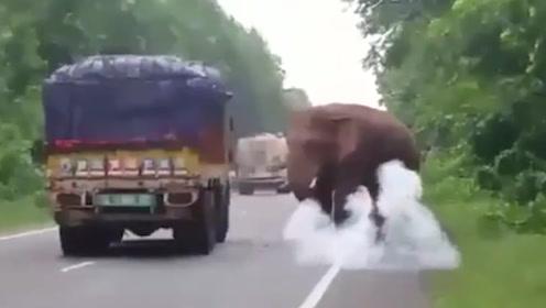 光天化日下的,这头大象偷车上几个土豆尝尝