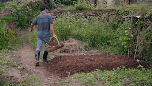 福建小伙在老家开辟一块土地,独自种菜,再也不用去菜市场了