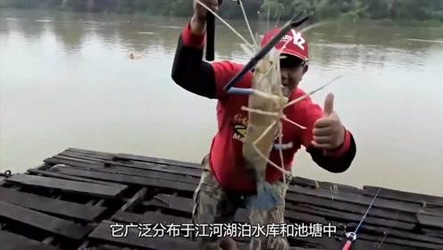 一群人在河边钓虾,明明是大对虾,却长了一副细长的钳子