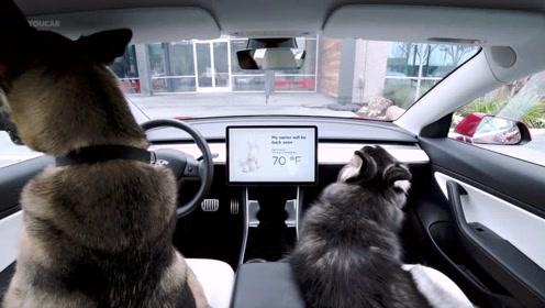 特斯拉有了这个黑科技,再也不担心把宠物放在车内了